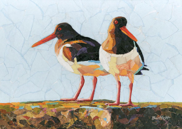 Oystercatcher pair