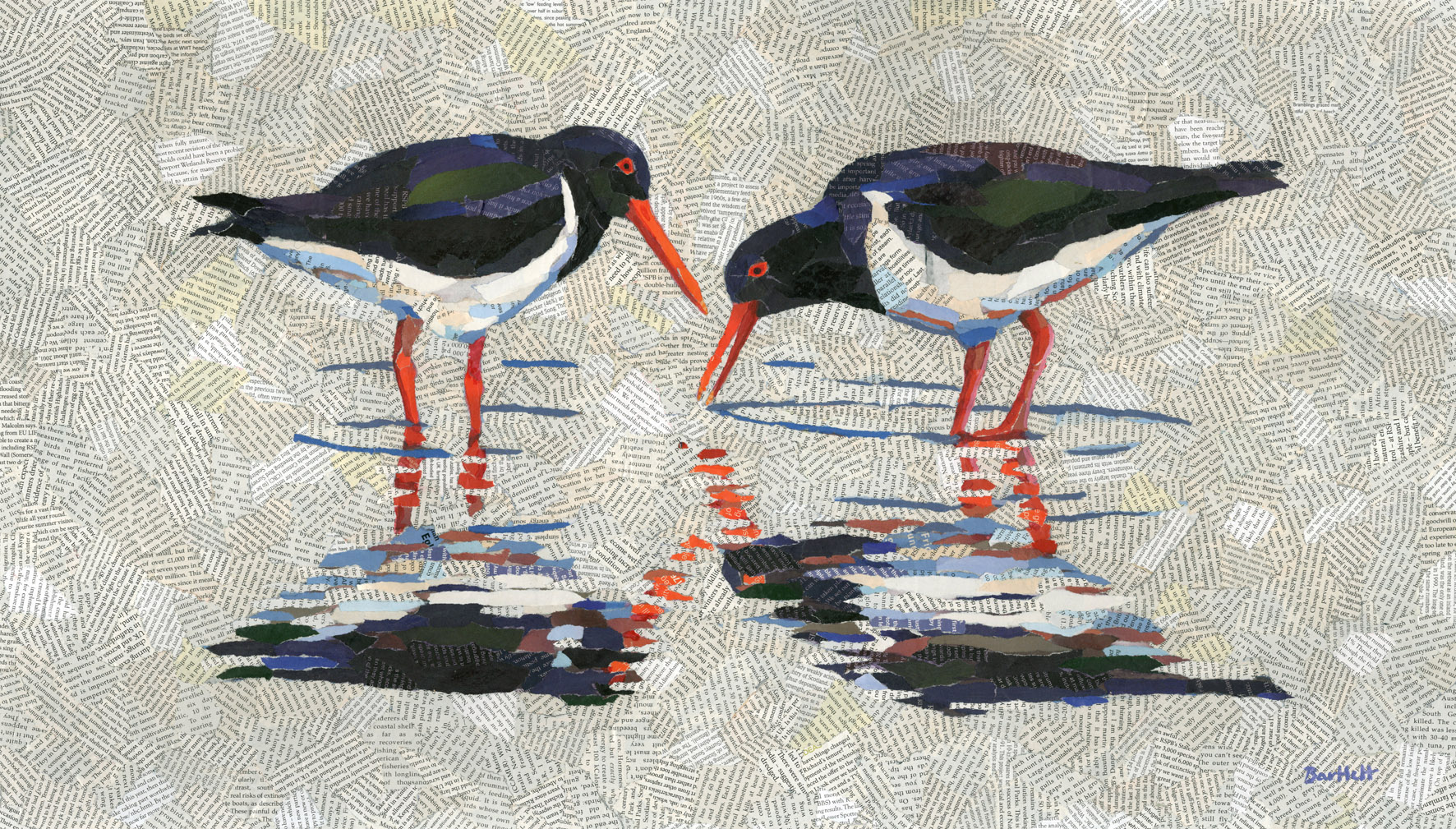 Oystercatcher pair reflected