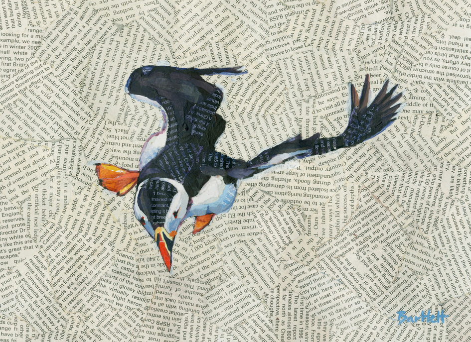 Puffin in a gust