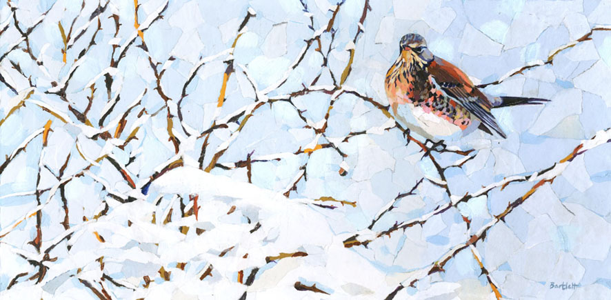 Winter fieldfare